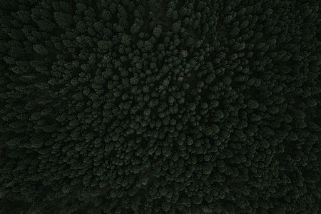 texture, forest, tree, drone view