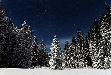 snow covered green pine tree under blue sky