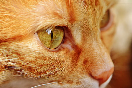 close-up photo of tan cat