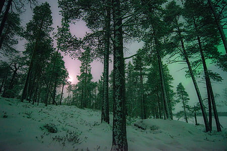 green trees during winter