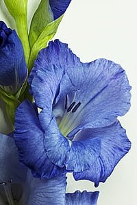 close up photo of blue petaled flowers