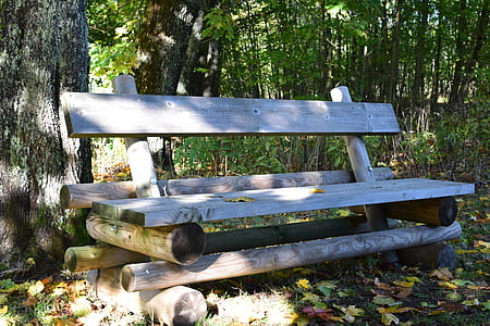 Brown Wooden Bench Near Tree Stem