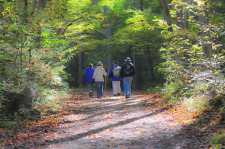 four people walking between trees during daytime