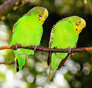 selective photography of two green birds
