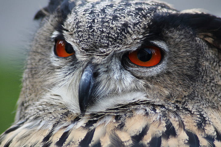 close view of grey and black owl with brown eyes