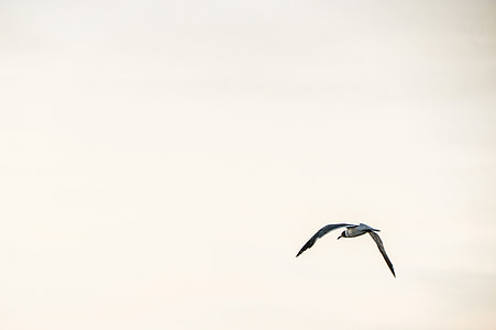 Photo of a seagull bird in flight against a clear sky