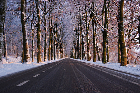 Road in the winter with trees and snow in forest