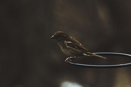 closeup photo of brown sparrow bird