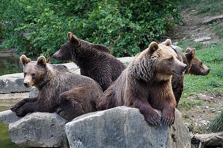 four brown bears photograph