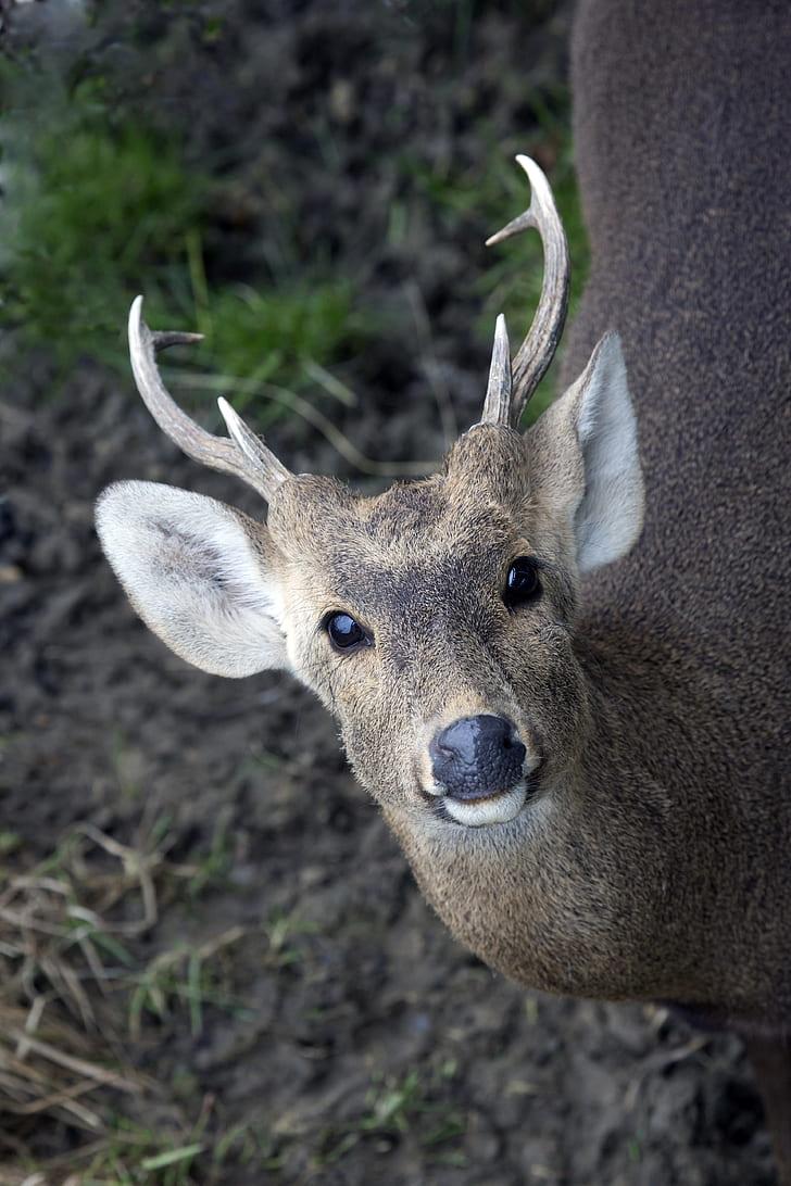 deer in macro photography