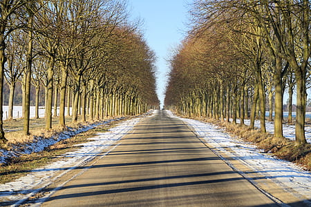 photo of asphalt road between trees during daytime