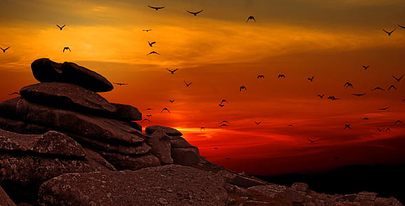 silhouette of flock of birds flying over the mountain during sunset