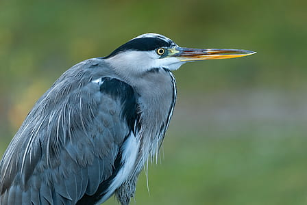 depth of field photograph of gray bird