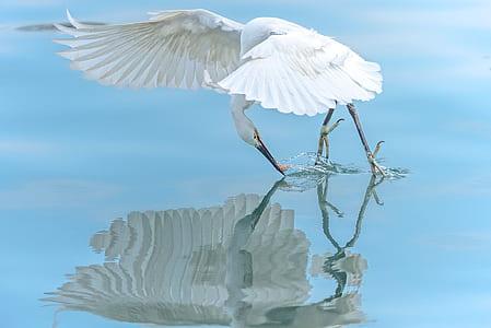 white bird on body of water