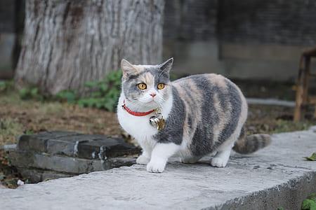 gray and orange cat on pavement