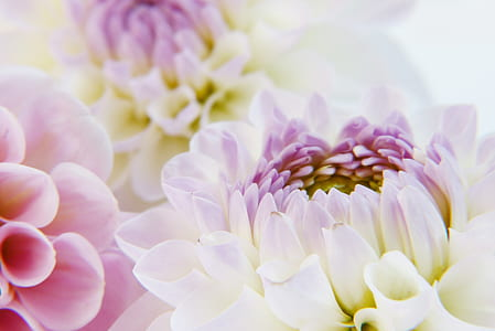 close-up photography of white and pink petaled flowers in bloom