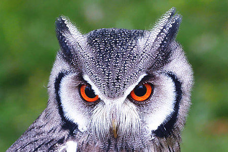 Closeup shot of owl bird