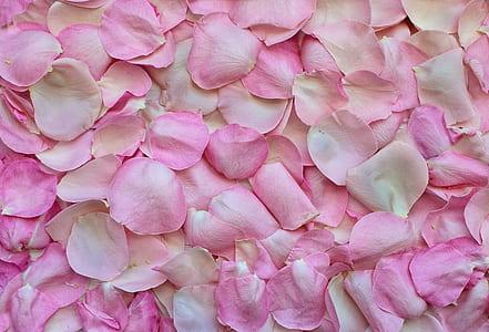 pile of pink rose petals
