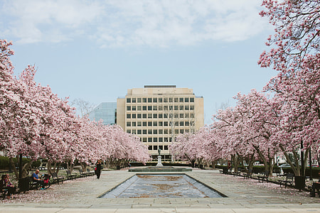 white painted establishment shot through statue surrounded by Cherry Blossoms