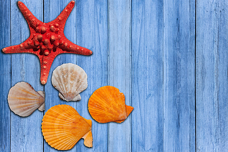 five assorted sea shells
