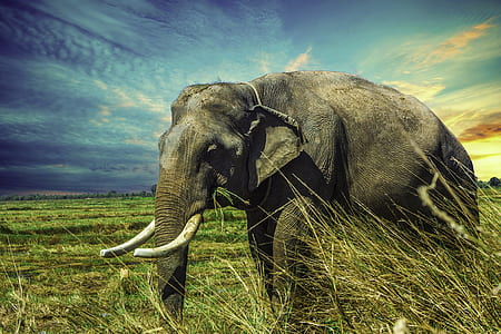 elephant on green grass field