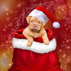 dog wearing Christmas hat wallpaper