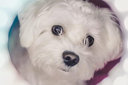 dog, white, pet, canine, face