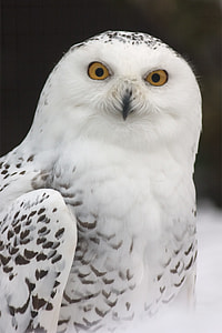 photo of white and gray owl