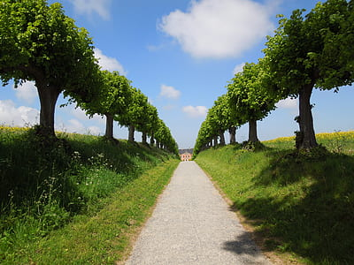 gray pathway between green trees under white and blue sky