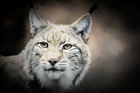 white and brown wild cat painting