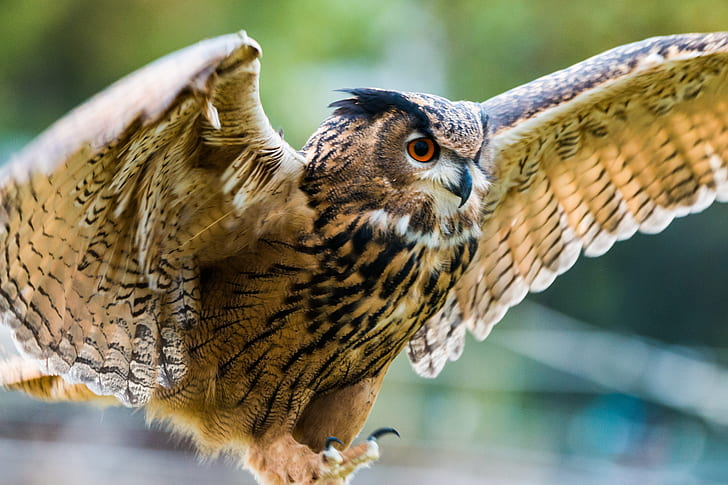 brown owl in closeup photography