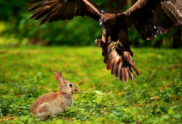photography of brown eagle