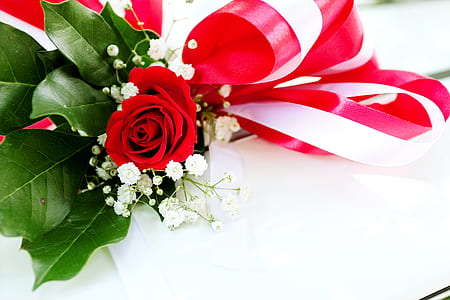 Red Rose Flower on White Surface