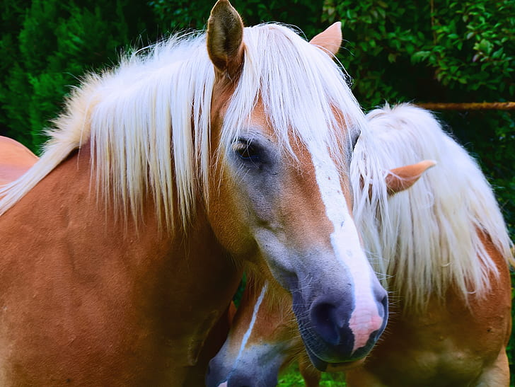 portrait photo of brown and white horse