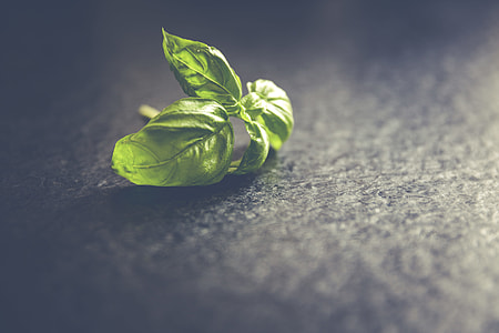 Fresh basil leafs close up