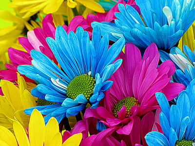 closeup photo of blue, pink, and yellow petaled flowers