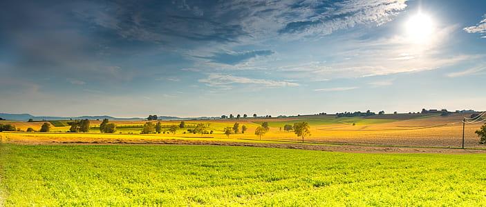 green field near trees under blue sky