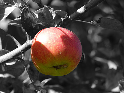 red and green apple fruit in selective color photography