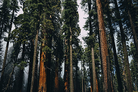 tall trees at daytime