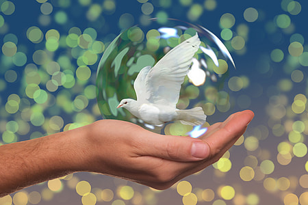 human hand with white dove in bubble