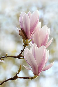 close-up photography pink petaled flowers
