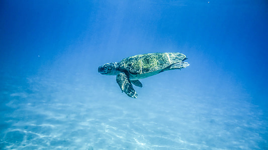 photography of green turtle underwater