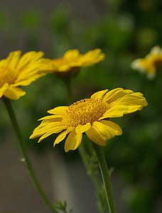 yellow petaled flower close-up photography