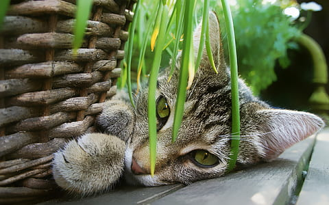 close up photography of tabby cat near gray wicker basket during daytime