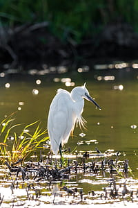 white long-beak bird on body of water in selective focus photography at daytime