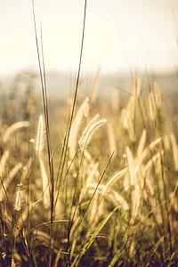 Brown Field Grains