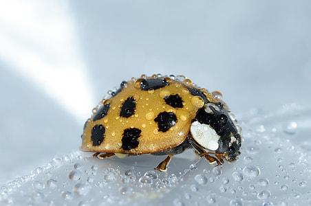 yellow and black ladybug photograph