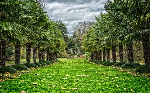 fan palm trees
