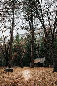 cabin, forest, outdoor, wilderness, outdoors
