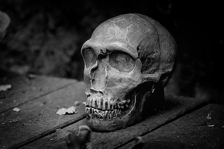 grayscale photography of gray skull